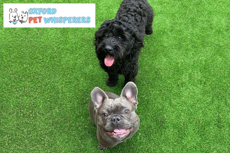 Nidagreen Artificial Grass Underlay used at Daycare Centre for Dogs
